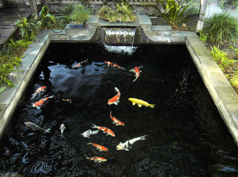 Garden ponds landscaping koi for How to make koi pond water clear