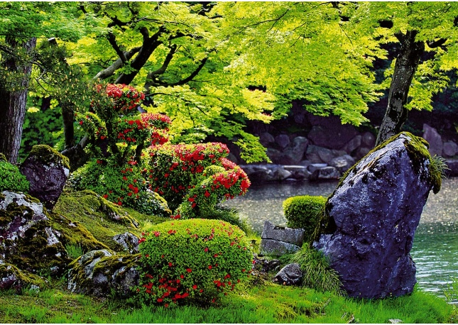 Image gallery japanese garden flowers for Flowers for japanese gardens