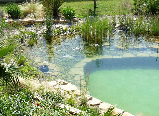 Natural Swimming Pool Ecological 4