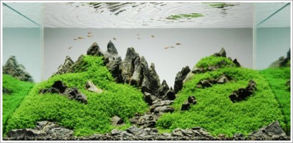 Living Room Design with Aquascape [02]