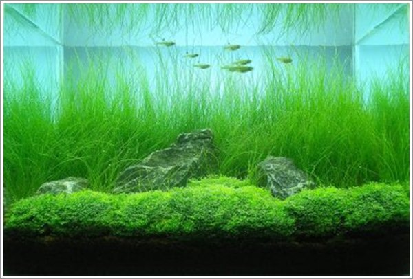 Living Room Design with Aquascape [04]