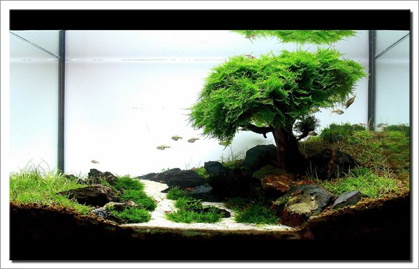 Living Room Design with Aquascape [05]