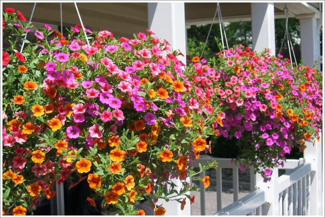 Terrace with hanging basket