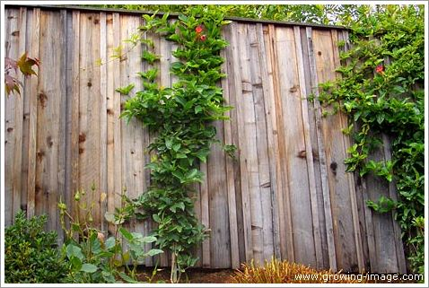 Backyard with vines Pictures -02