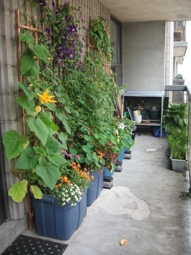 vegetables, herbs and plants